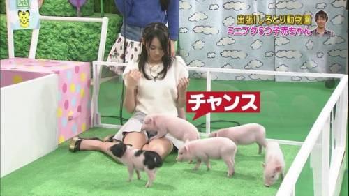 【放送事故画像】TVでパンツが見えてる?んなアホなww見えてるじゃない!! 17